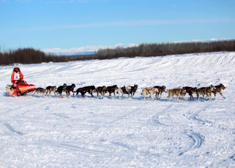 dog sled in the snow in 2020 Iditarod