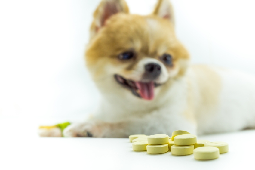 dog with yellow pills